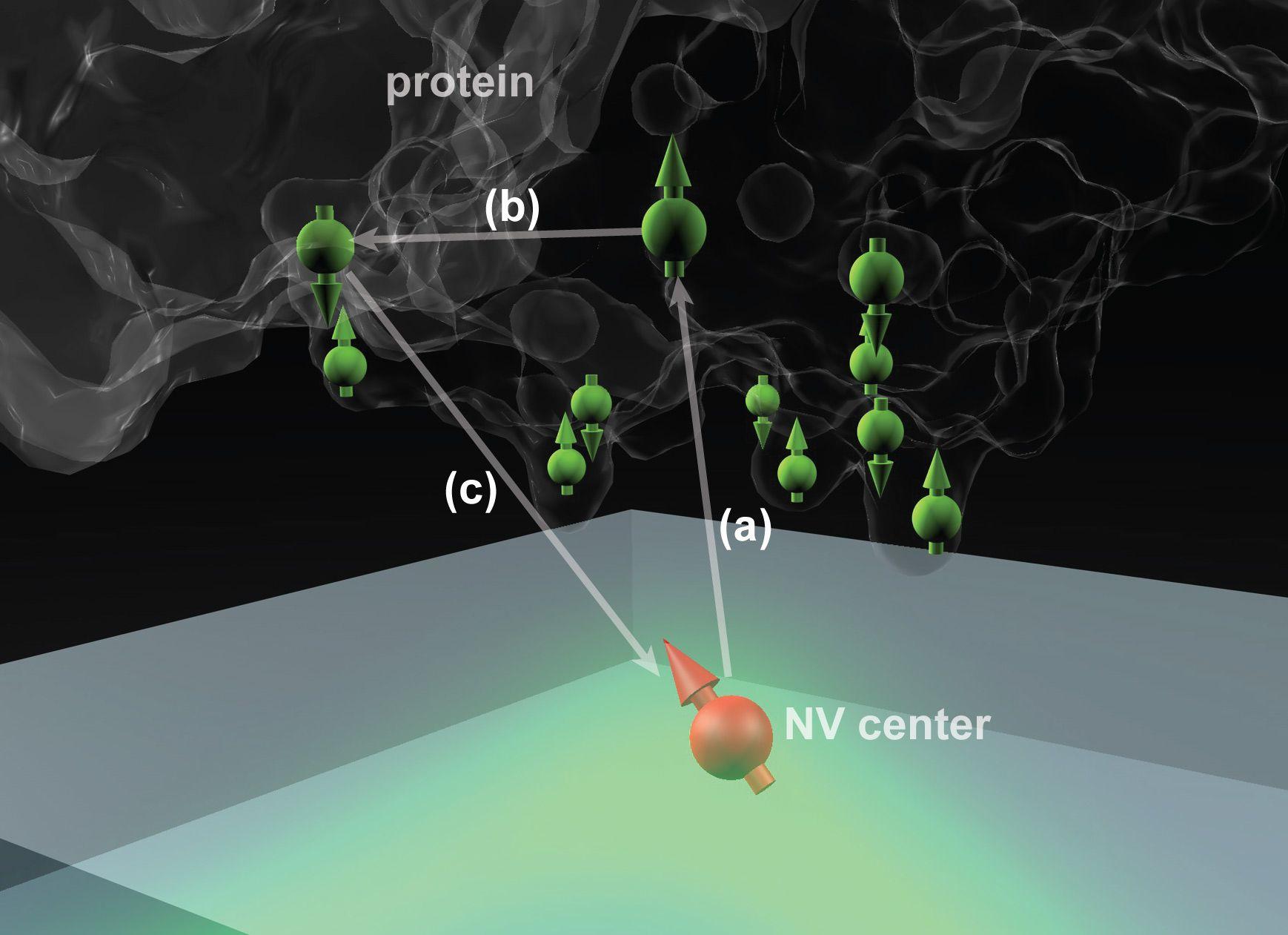 Proteina care declanșează protecția în timpul foametei de azot