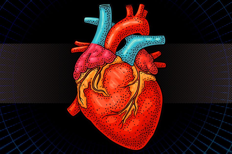 Engineers Design Bionic Heart For Testing Prosthetic Valves Other Cardiac Devices Mit News Massachusetts Institute Of Technology