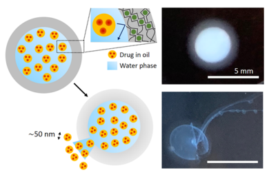 A new platform for controlled delivery of key nanoscale drugs and more
