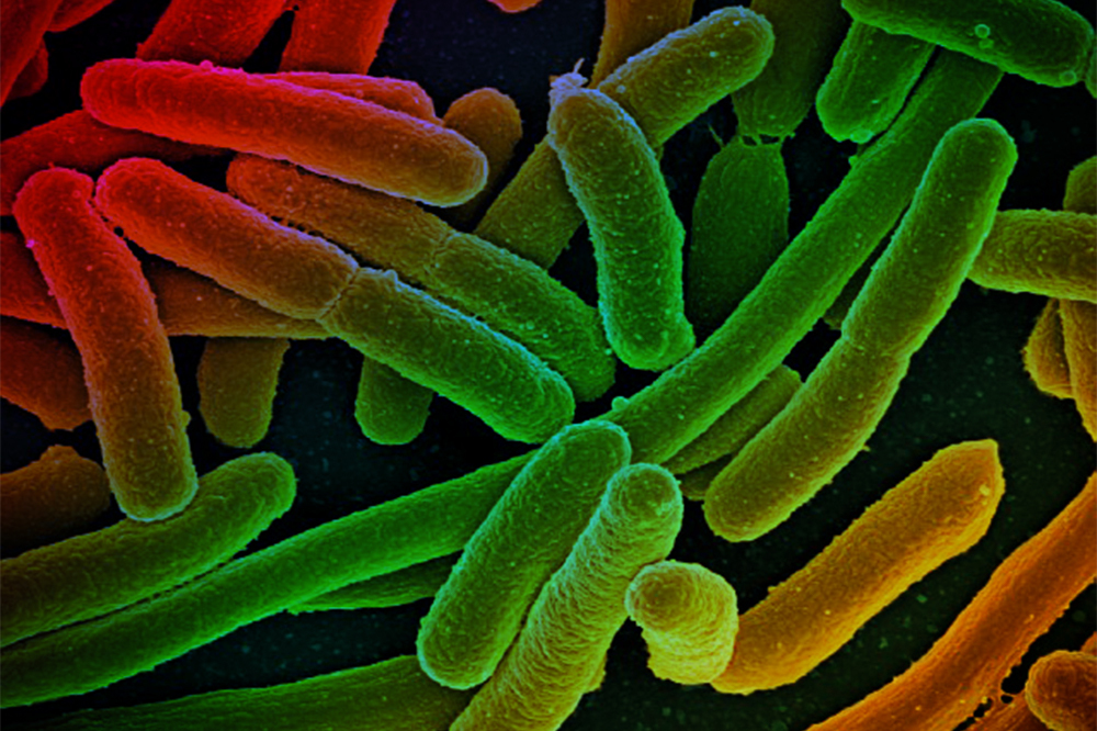 Metabolic mutations help bacteria resist drug treatment