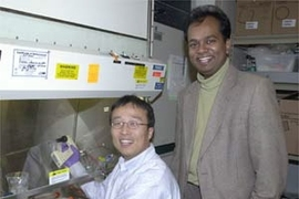 MIT Research Associate Dongfang Liu treats melanoma tumor cells with the sugar fragments he and colleagues report inhibit tumor growth. At right is Associate Professor Ram Sasisekharan, leader of the team. Both are in MIT's Division of Bioengineering and Environmental Health.