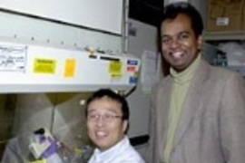 Research Affiliate Dongfang Liu and Associate Professor Ram Sasisekharan, shown here in the lab in 2002, are part of an MIT team whose research on complex sugars has has led to a variety of potential medical applications. This month the team, led by Sasisekharan, report the creation of designer drugs for preventing blood clots.