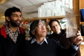 Graduate student Arvind Govindarajan (left), Professor Susumu Tonegawa (center) and postdoctoral fellow Ray Kelleher look at films in the lab.