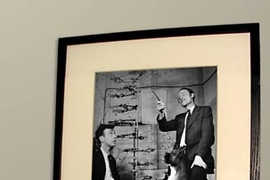 Dogs of different breeds look up at a photo of James Watson and Francis Crick with a model of the structure of DNA. Researchers have just announced they have sequenced the dog genome.