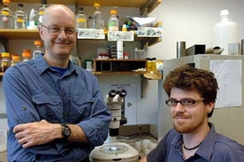 Biology professor Leonard Guarente, left, and postdoctoral associate Nicholas Bishop, in the lab where they have been studying longevity in the nematode worm Caenorhabditis elegans.