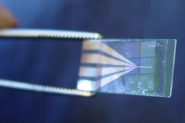 Tweezers hold the device used to test MIT's new components for microbatteries (batteries themselves are invisible in this image).