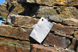 A metal tag hammered into a rock at the bottom of the section that contain the microfossils. The U of A refers to the University of Alaska; Tindir is the name of the nearby creek and the original name of the group of rocks the fossils were found in; 79 refers to the year 1979 when paleontologists first explored these rocks.