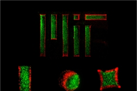 Using a temperature-responsive micromold, MIT engineers created two-layer gel microparticles (the red and green areas represent separate layers).