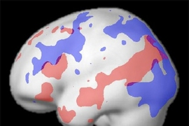 A map of the different brain areas that are active while a subject performs a language task (red) and a cognitive control task (blue), showing that nearby but distinct regions are used for each activity.