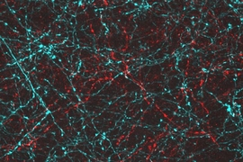 MIT-led researchers engineered neurons so they can be activated with either blue or red light, allowing each population to be controlled separately.