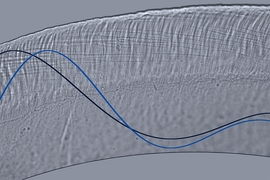 This optical microscope image depicts wave motion in a cross-section of the tectorial membrane, part of the inner ear. This membrane is a microscale gel, smaller in width than a single human hair, and it plays a key role in stimulating sensory receptors of the inner ear. Waves traveling on this membrane control our ability to separate sounds of varying pitch and intensity.
