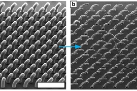 New process developed by MIT's John Hart and others can produce arrays of 3-D shapes, based on carbon nanotubes growing from a surface. In this example, all the nanotubes are aligned to curve in the same direction.