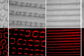 Images show textures (top) and fluorescent light (bottom) produced by the new synthetic elastomer material that can mimic some of the camouflage abilities of octopuses and other cephalopods.