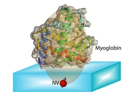 The spin of an NV center can be completely polarized optically. The transfer of this polarization from the NV center to nuclear spins in the protein molecule allows us to unravel couplings between spins in the molecule. Protein structure can be computed from information contained in these couplings.