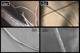 Microscope images of lab-produced fibers confirm the results of the MIT researchers' simulations of spider silk. At top are optical microscope images, and, at bottom, are scanning electron microscope images. At left are fibers 8 micrometers across, and, at right, are thinner, 3 micrometer fibers.