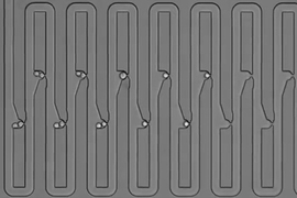 To track the family history for a single cell, researchers engineered a microfluidic device that traps first an individual cell and then all of its descendants. The device has several connected channels, each of which has a trapping pocket used to capture single cells in precise locations. After the initial cell grows and divides, its progeny float downstream and are captured in the next availabl...