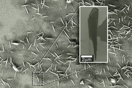 An electron microscopy image shows many examples of nanoscrolls. The insert zooms in on a single nanoscroll and reveals its conical nature.