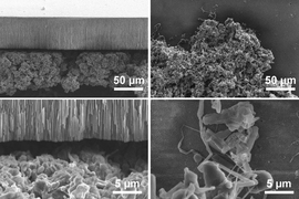 At right, scanning electron microscope (SEM) images show the two types of lithium deposits, the bulky, mossy type (at top), which grows from its base, and the needle-like dendritic type (bottom), which grows from the tips. At left, SEM images show the effect of a blocking layer of ceramic material that limits the growth of the mossy deposits.