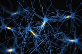 Researchers have developed a way to label neurons when they become active, essentially providing a snapshot of their activity at a moment in time.