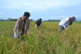 Farmers preparing land for planting, Barangay Maac, Sogod, Southern
