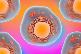 MIT engineers have devised a way to assess a cell's mechanical properties simply by observation. The researchers use standard confocal microscopy to zero in on the constant, jiggling motions of a cell's particles.