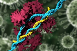 In a new study, MIT researchers have developed nanoparticles that can deliver the CRISPR genome-editing system and specifically modify genes, eliminating the need to use viruses for delivery.