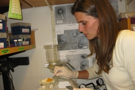 Postdoc Kathryn Kauffman processes seawater samples in the lab to extract the bacteria-infecting viruses they contain.