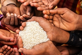 "About 30 percent of Indonesia's households are supposed to receive subsidized rice from the government every month as part of a huge program called ""Raskin,"" or ""Rice for the Poor."" The study shows that the amount of rice the villagers actually receive increases 26 percent when they are sent a simple information card with program details."