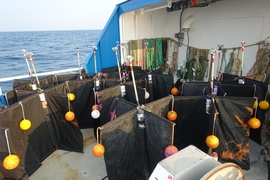 In 2017 and 2018, the team sailed a small research vessel several hours out off the coast of Martha's Vineyard, where they deployed at various locations, an array of small round buoys, and human-sized mannequins.