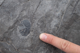 Photo of gray rock with a trilobite fossil (~1 inch wide) embedded, and a human finger pointing to it