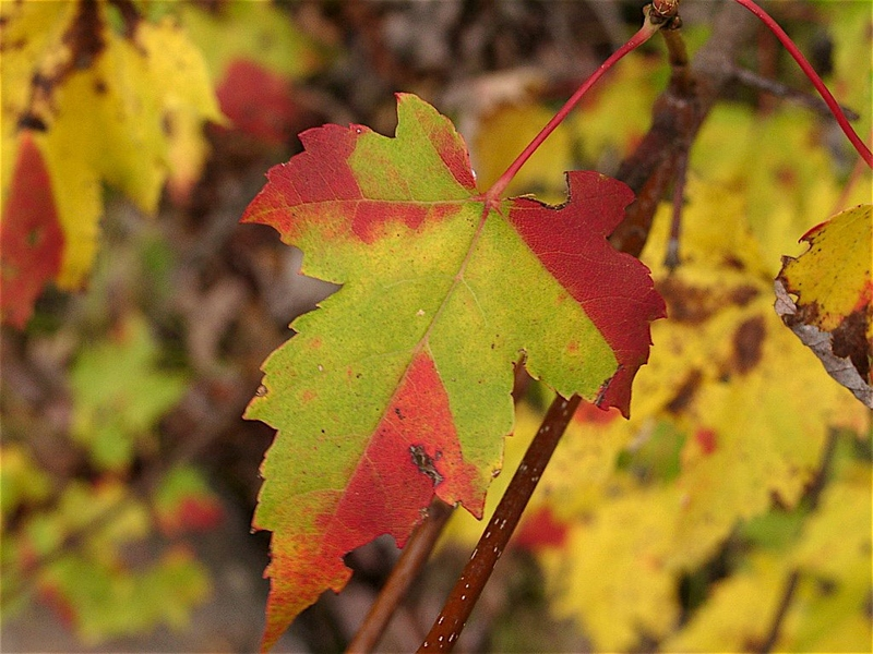 The Mathematics Of Leaf Decay Mit News Massachusetts Institute Of Technology
