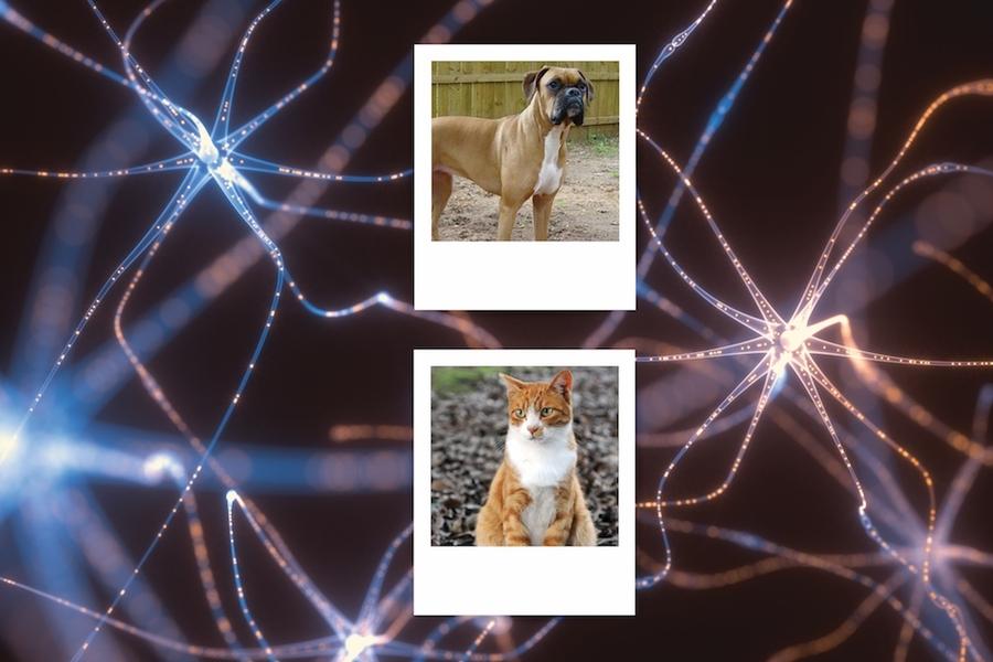 对抗性示例的输入略有变化,导致神经网络犯下通常不会发生的分类错误,例如将猫的图像分类为狗。