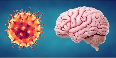 Mounting evidence suggests that the SARS-CoV-2 virus affects the brain, as well as the lungs.
